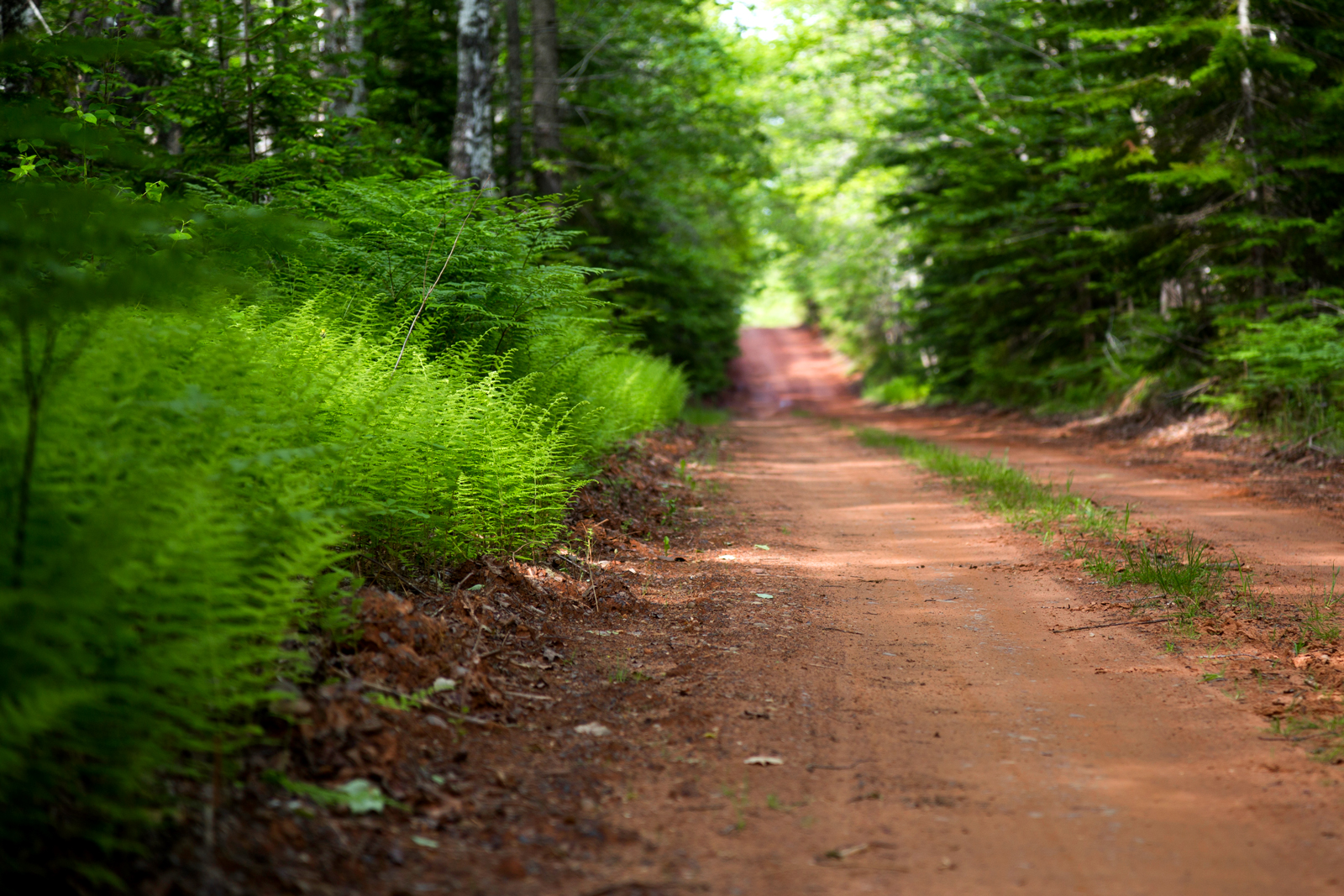 Rabbit Road, Forest Hill, PEI